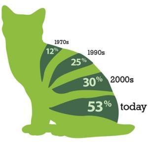 feline-obesity