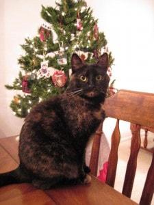 cat-christmas-tree-cute