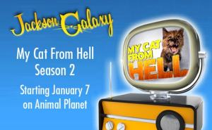 animal-planet-my-cat-from-hell