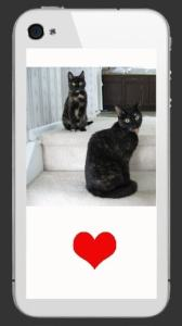 cats-iphone-sticker