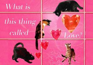valentines-cat-card