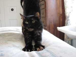 Allegra-cat-stretching