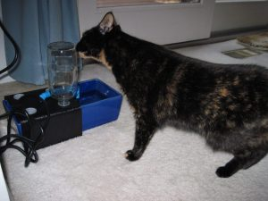 cat-fountain-cat-drinking