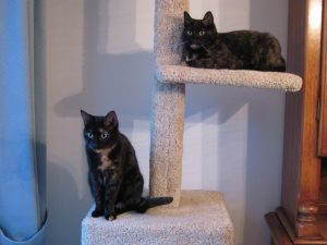 cats-on-cat-tree