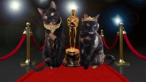 cats at the Academy Awards Oscars