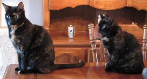 tortoiseshell cats table