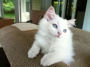 Brawny Cat Comfort Padlet