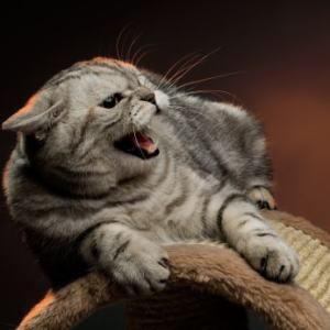 aggressive cat attack