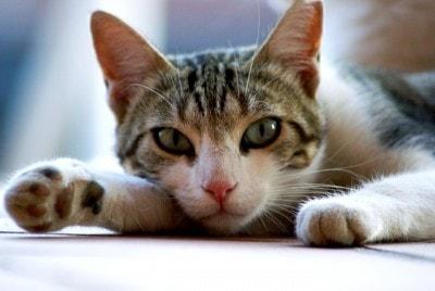 detox_cat
