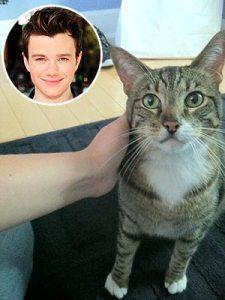 chris-colfer-adopts-cat