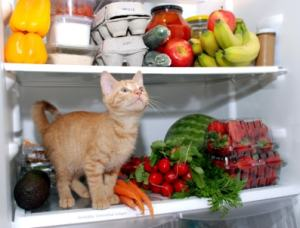 cat_in_refrigerator