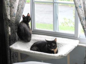 Ruby and Allegra on the window perch