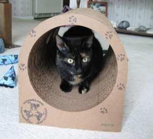 Allegra_catpod_cat_furniture
