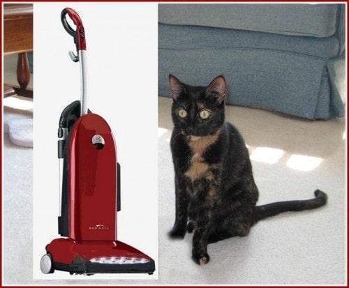 cat_with_vacuum cleaner
