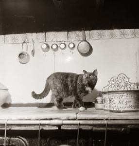 Minette_Julia_Child_cats