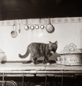 Minette_Julia_Child_cats