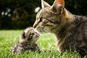 mother_cat_with_kitten