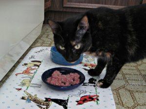 Pawgevity_raw_rabbit_cat_food