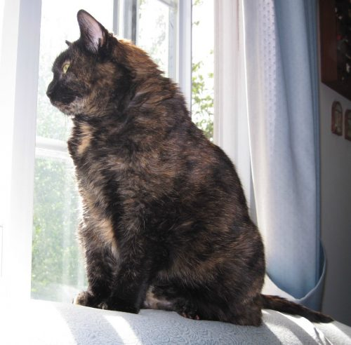 cat_window_looking_out