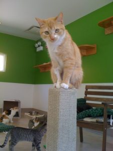 Harmony House for Cats New Shelter Press Release Photo
