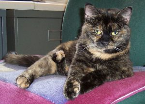 Buckley_cat_office_chair