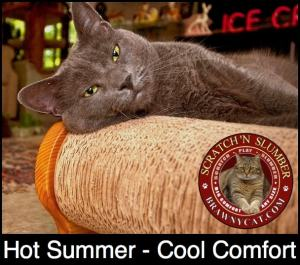 Brawny_Cat_comfort_lounge