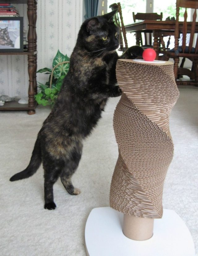 Ruby_with_moderncat_scratch_tower