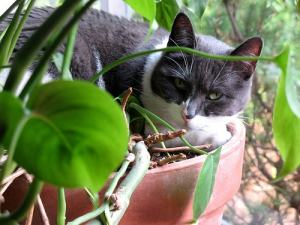 cat_in_flower_pot