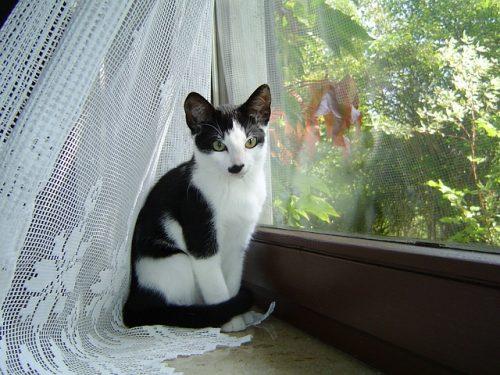 cat_at_window