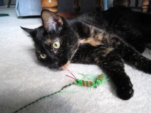Allegra with Neko Flies Kattipede