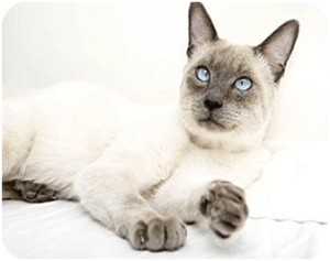 average lifespan of a cat with hyperthyroidism