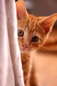 orange_kitten