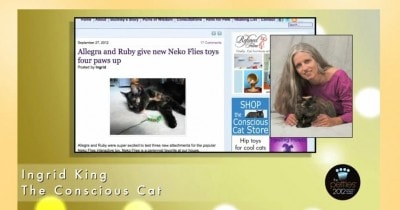 2012 Petties Best Cat Blog