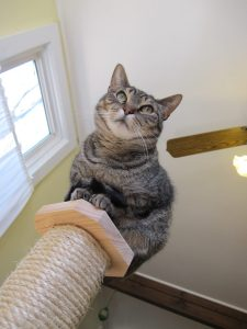 cat_scratching_post