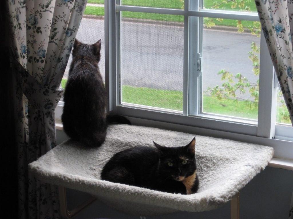 Allegra s World new window perch