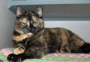adopt_a_senior_cat