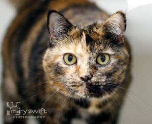 senior_tortoiseshell_cat