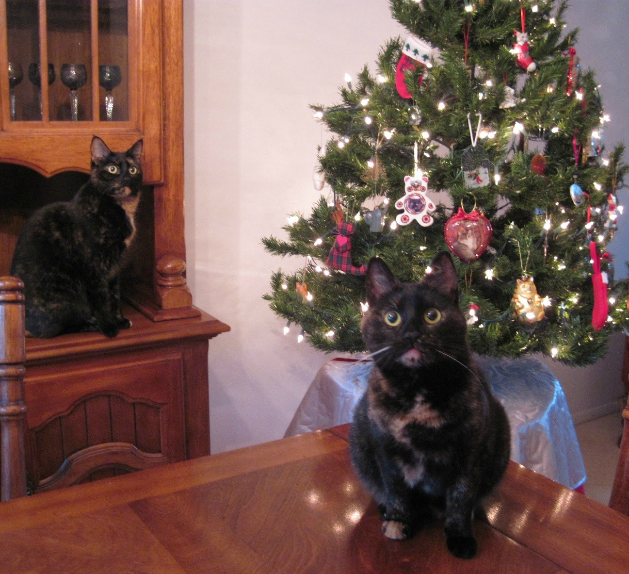 Cats And Christmas Trees