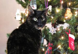 cat-with-Christmas-tree