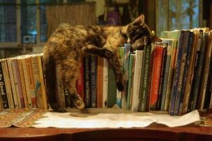 cat_sleeping_on_books