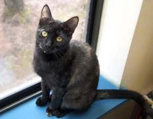 Kitties for Kids Newton