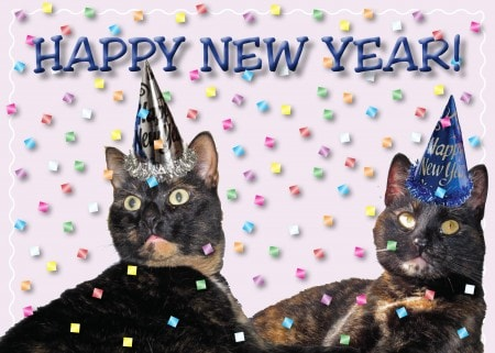 happy new year from allegra ruby and ingrid
