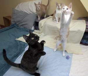 Kitten Associates Newtown CT