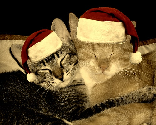 cats with Santa hats