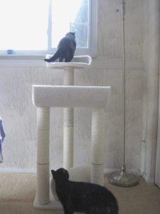 cat tree test