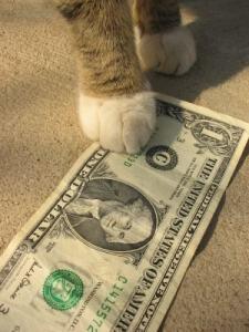 cat_with_money
