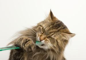 cat_with_toothbrush
