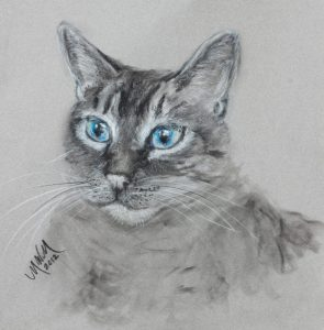 cat_portrait