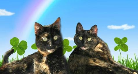 St._Patrick's_Day_cats