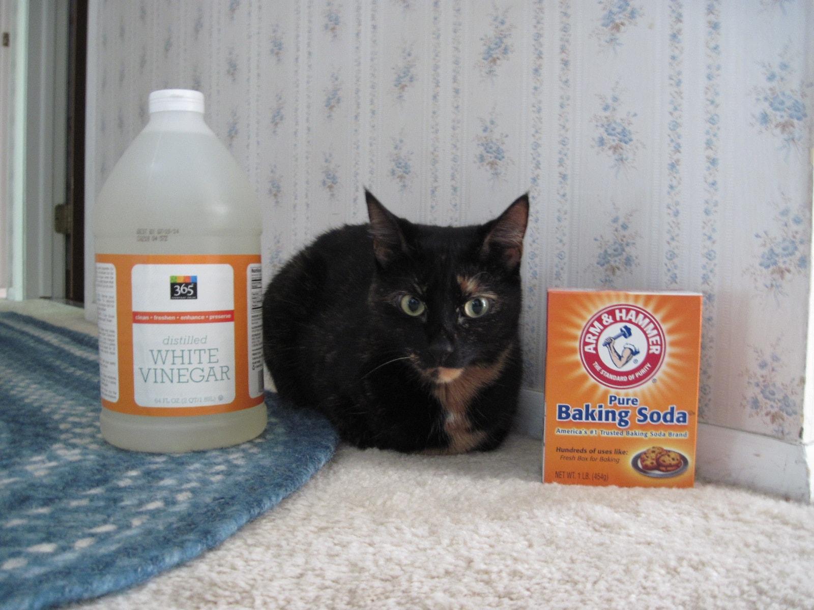 Zero Sensation Home cat Pee